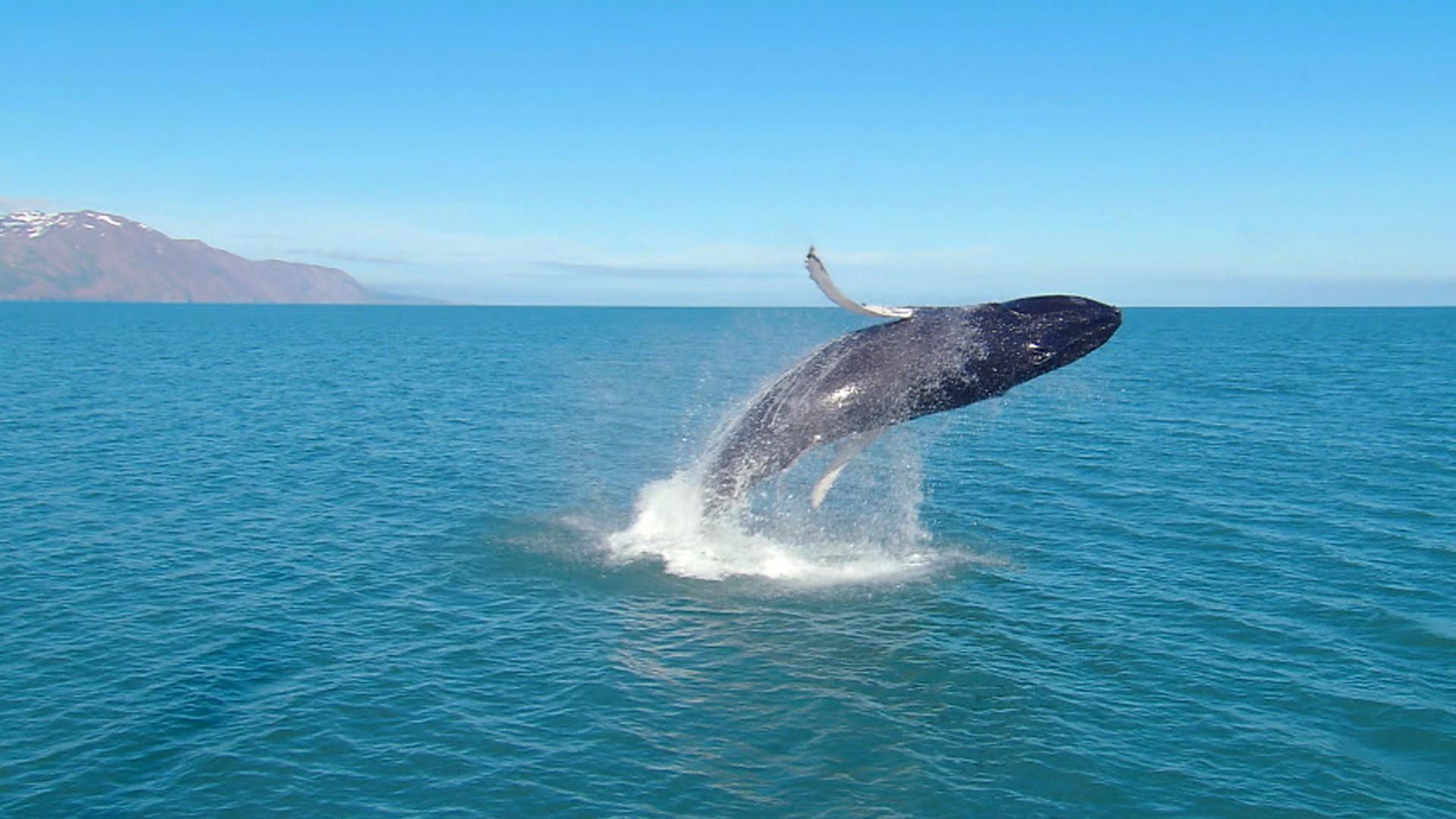Wale Wales